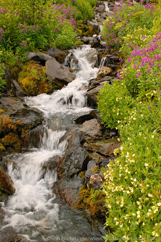 Harding Icefield Trail Wildflowers