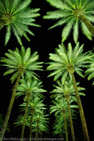 Palm trees, photos