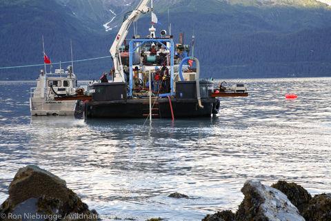 Cable Ship Shamrock