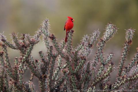 Fountain Hills, Arizona, bird, photos