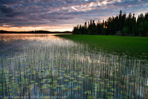 Tetlin National Wildlife Refuge, Alaska.