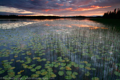 etlin National Wildlife Refuge, Alaska.