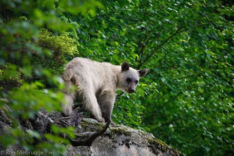 bear, photos