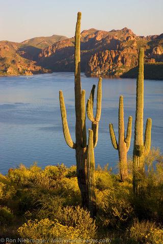 Tonto National Forest, Arizona