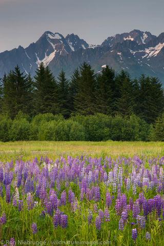 Mount Alcie from Seward, Alaska