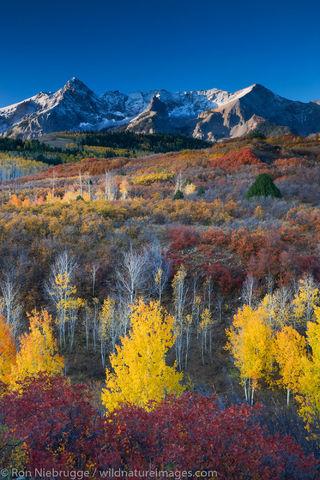 Autumn colors, Dallas Divide,  Colorado.