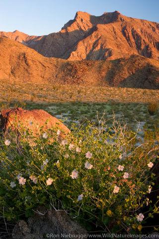 Wildflowers at sunrise.