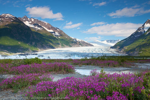 Fireweed field and the Spencer Glacier