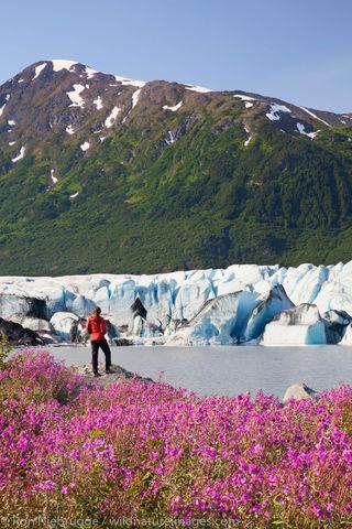 Visitor to the Spencer Glacier
