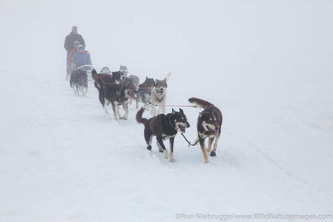 Sled dog tour