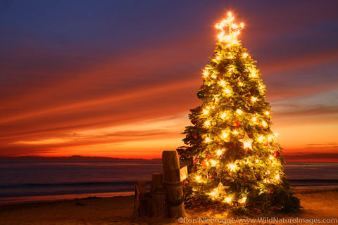 Christmas Tree at Crystal Cove Beach
