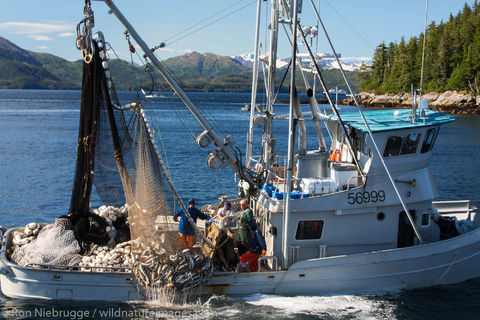 Commercial Salmon Fishing