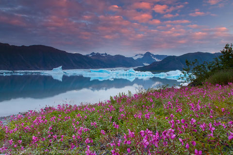 Wildflowers in Bear Glacier Lagoon