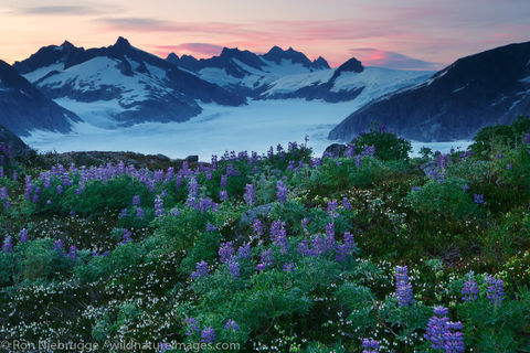 Wildflowers and the Mendenhall Glacier