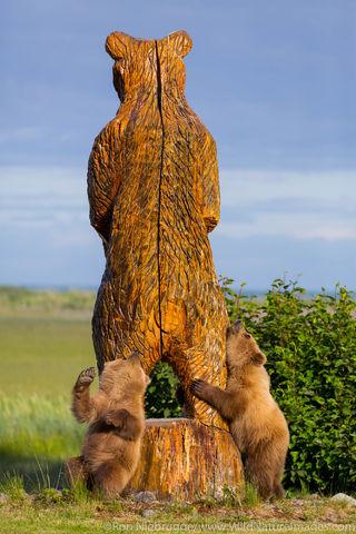Back Scratching Bear