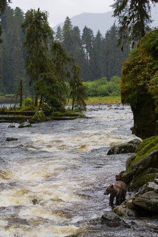 Anan Creek