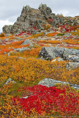 Arctic, Alaska, autumn, color