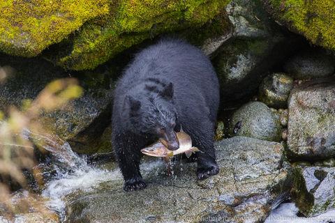Black Bear Fishing