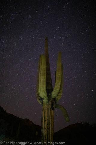 Arizona Night
