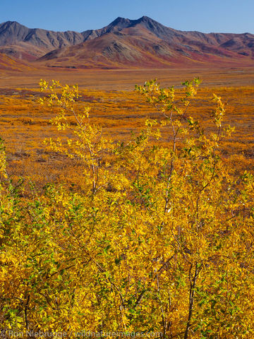Fall in the Brooks Range