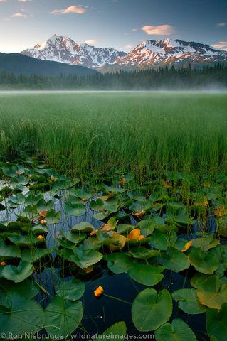 Lily Pond, Alaska.