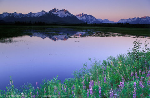 AK, Alaska, Alaskan, Chugach, Chugach National Forest, Copper River Delta, Cordova, National, North America, North American...