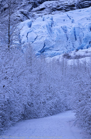 AK, Ak., Alaska, America, American, Americas, Exit, Exit Glacier, Kenai Fjords National Park, Kenai Peninsula, National, Niebrugge...