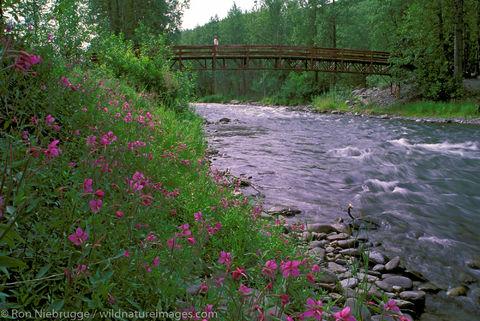 AK, Alaska, Alaskan, America, American, Americas, Chugach, Chugach National Forest, Hope, National, North, North America, North...