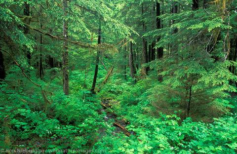 AK, Alaska, Americas, North America, North American, Ron Niebrugge, Sitka, Southeast Alaska, Tongass National Forest, U.S., United...