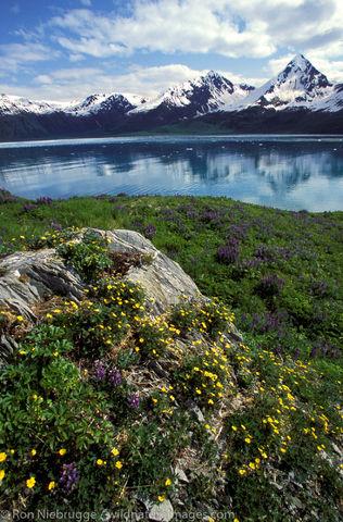 AK, Aialik, Aialik Bay, Alaska, Alaskan, America, American, Americas, Island, Kenai Fjords National Park, Kenai Peninsula, National...