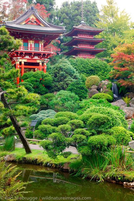 Japanese Tea Garden, photos