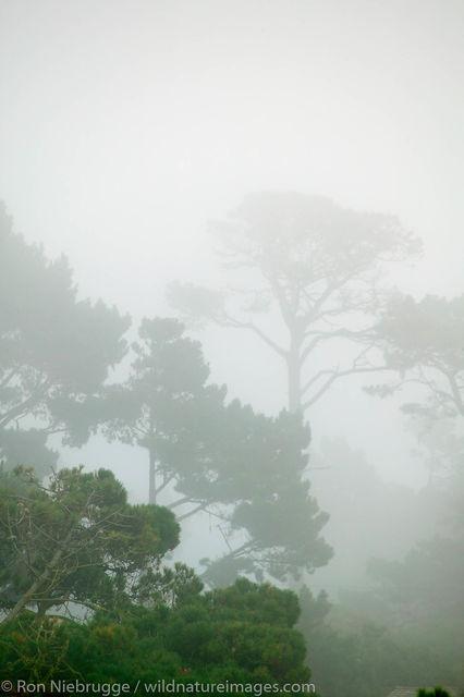Monterey Peninsula, California