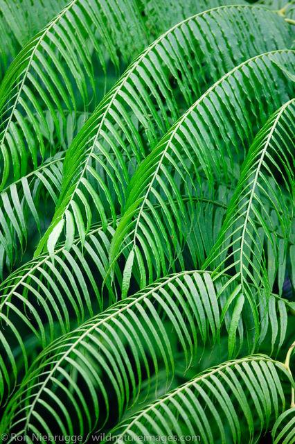 Tabacon Hot Spring Resort , Costa Rica