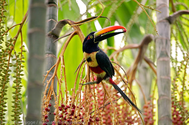 Costa Rica, photos, bird