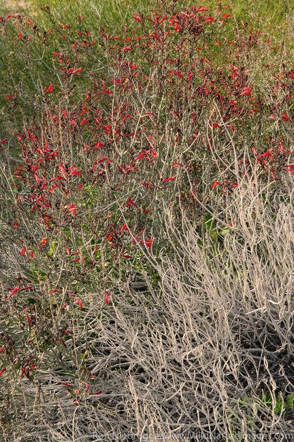 Anza Borrego Desert State Park