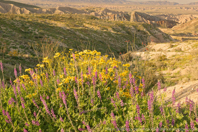 Carrizo Badlands Overlook