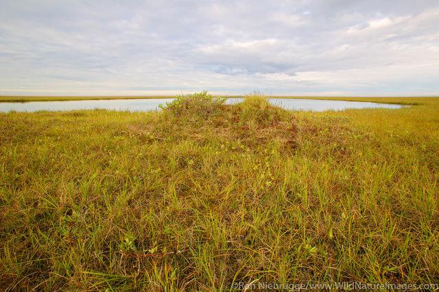 Arctic Coastal Plain