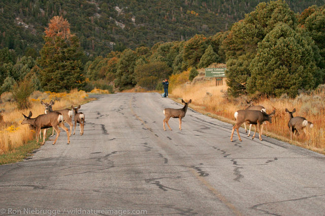 Great Basin Natoinal Park