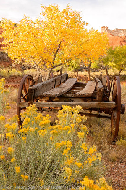 Fall in Fruita