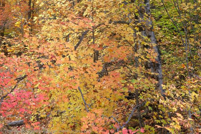 West Fork of Oak Creek trail