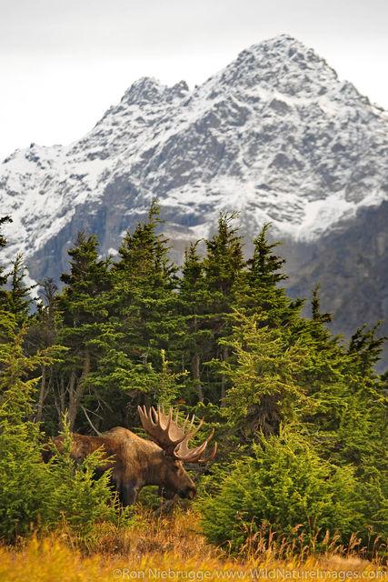 Chugach State Park, Alaska Chugach