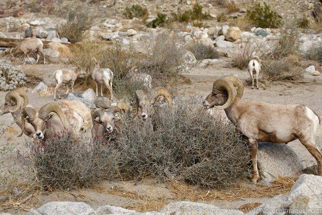 Anza Borrego Desert State Park, California.