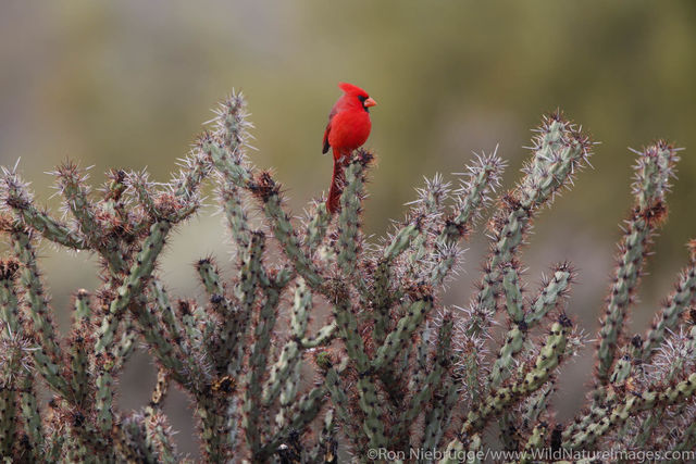 Fountain Hills, Arizona, bird, photos