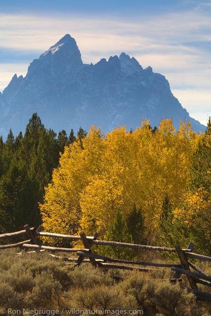 Autumn, Grand Teton National Park
