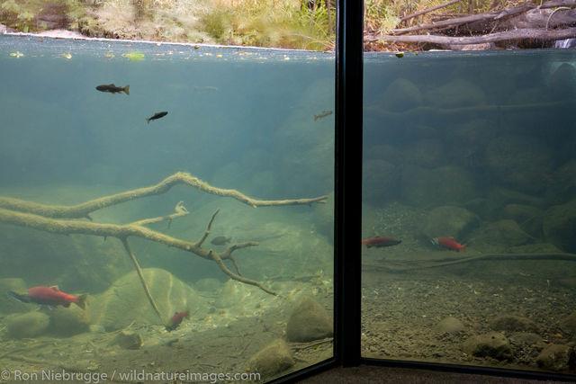 Taylor Creek, Lake Tahoe, California