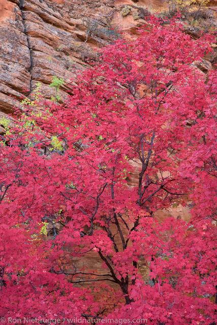 Autumn, Zion National Park