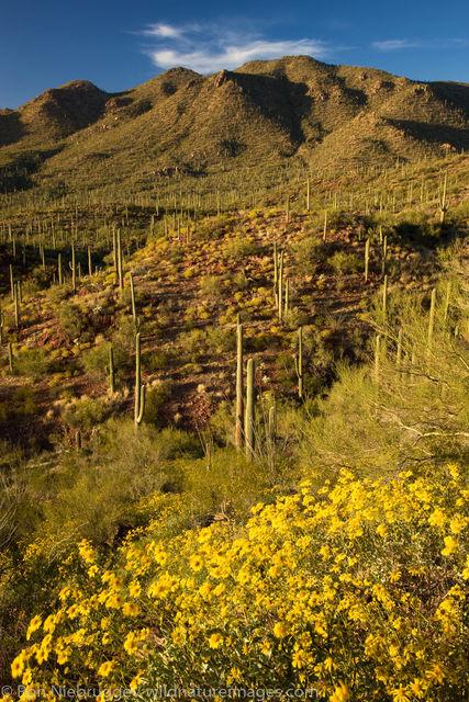 Saguaro National Park, Tucson, Arizona