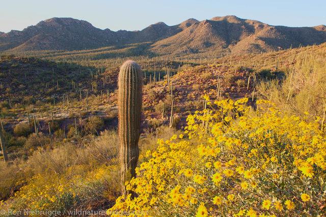 Saguaro National Park, West District