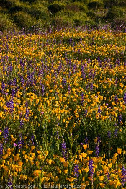 McDowell Mountain Regional Park