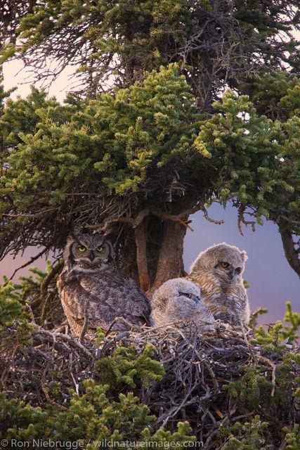 Denali National Park, Alaska, photo, picture, bird, photos
